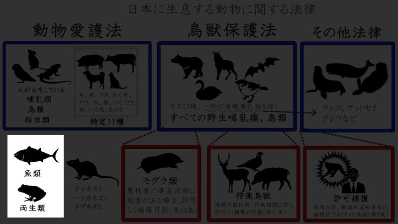 日本の動物1234