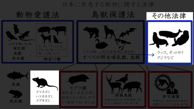 日本の動物sdfwer