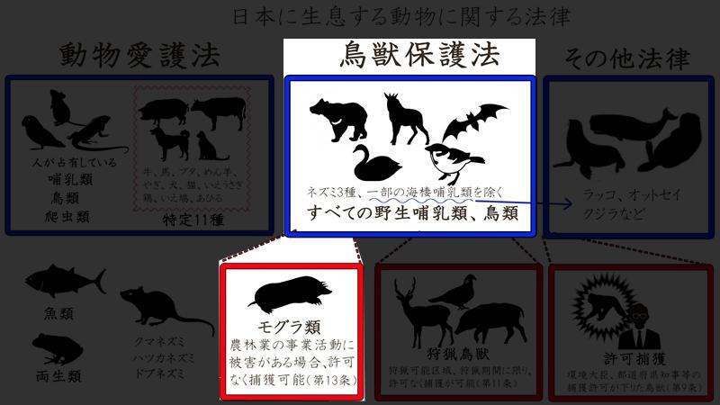 日本の動物mogura
