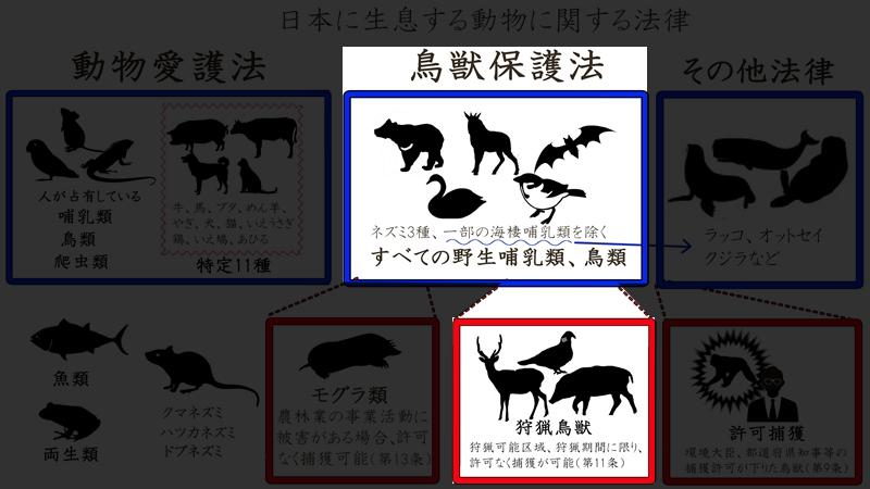 日本の動物sdfwer2