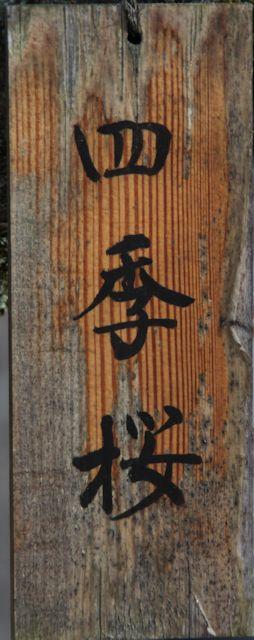 B20151129B_四季桜9_IMG_0791