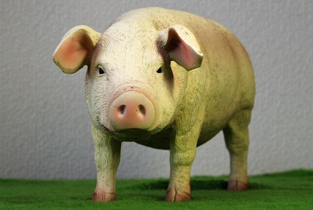 ZYTOYS PIG 02