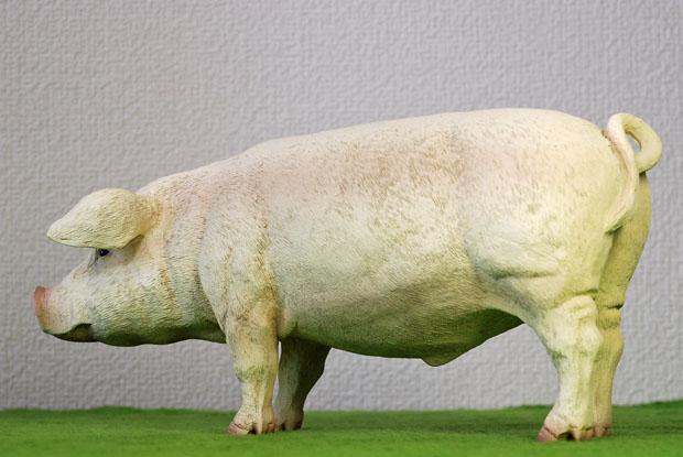 ZYTOYS PIG 03