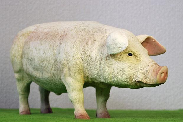 ZYTOYS PIG 04