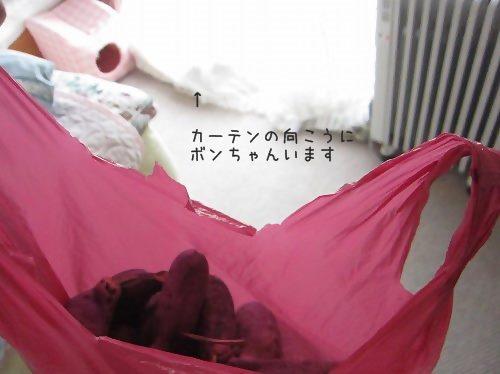 IMG_1429 2015 9 (377)