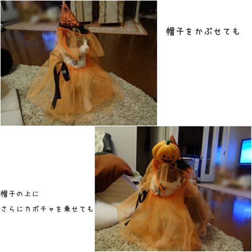 cats_201510301620190bf.jpg