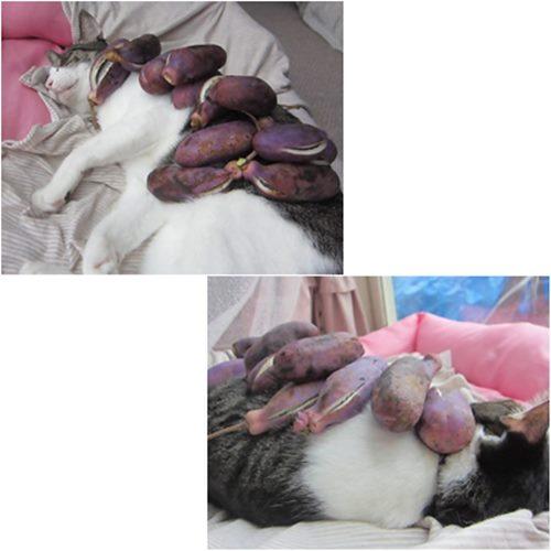 cats_20151031211104ee9.jpg