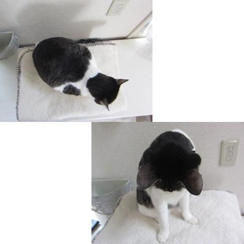 cats_20151112130941736.jpg