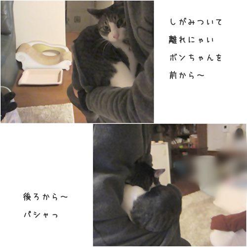 cats_2015111720190061a.jpg
