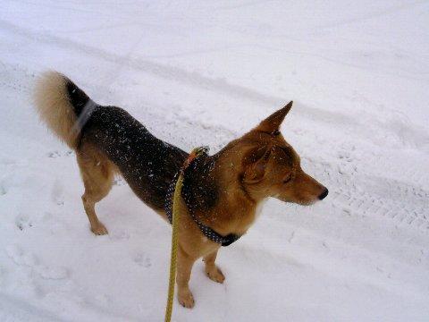 雪と、さすけ。