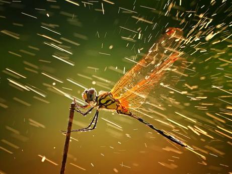 dragonfly-rain-storm_45835_big.jpg