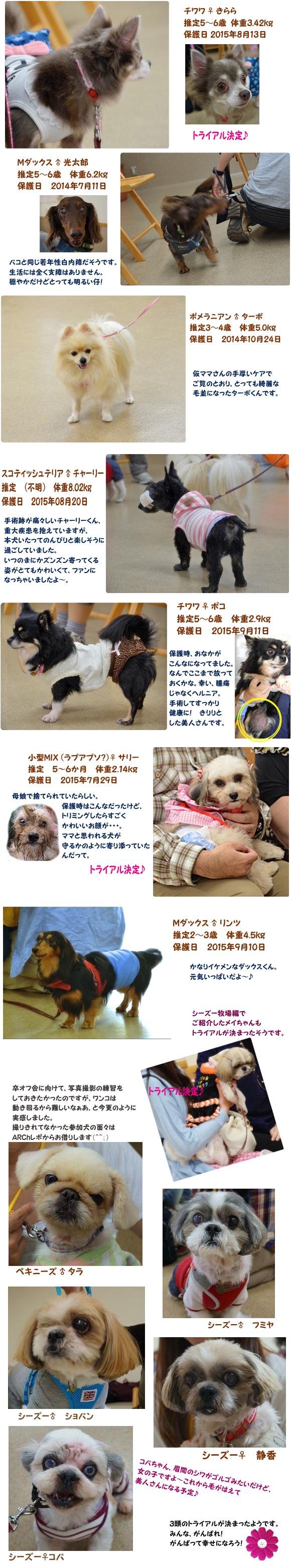 参加犬紹介Part2 のコピー