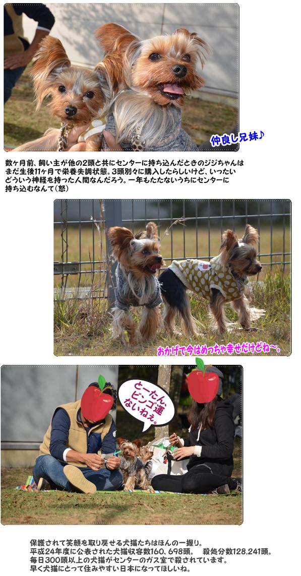 14りんご&ジジちゃん のコピー