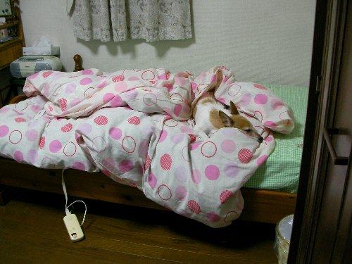 201511080350真夜中おねむ③-1