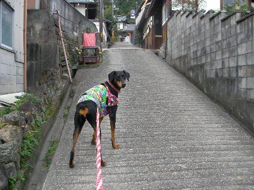 201512011330谷田寺参道②-1