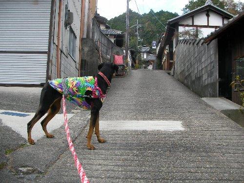 201512011330谷田寺参道①-1