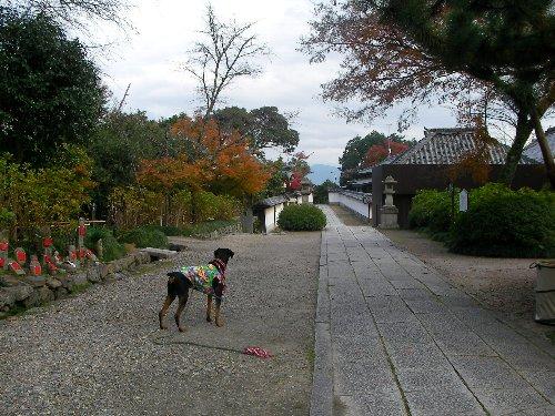 201512011430谷田寺境内①-1
