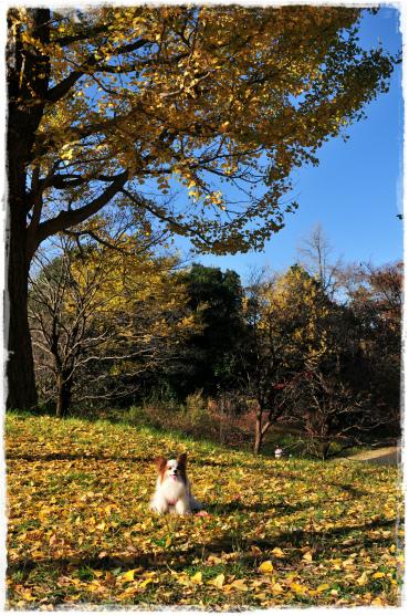 昭和記念公園29