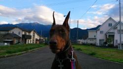Brianna 散歩道