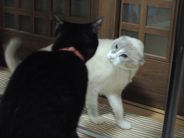 Quarrel?5