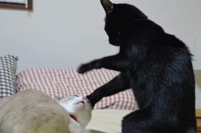Quarrel?4