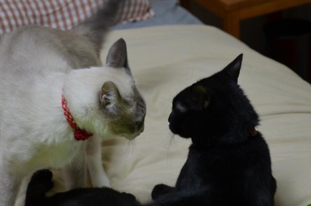 Quarrel?3