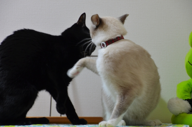Quarrel?2