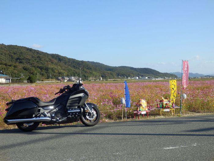 10月25日 カウボーイ (2)