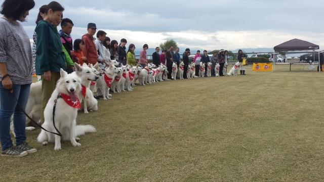 徳島ホワイトスイスシェパードドッグクラブの犬達