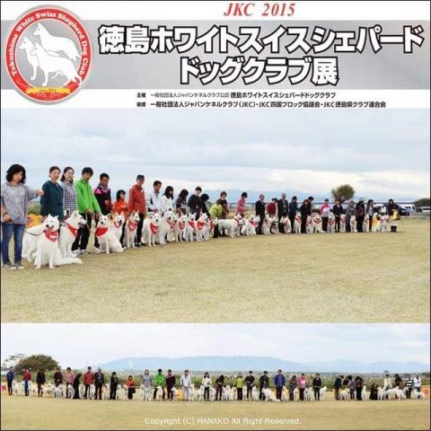 徳島ホワイトスイスシェパードドッグクラブ展2015年11月7日
