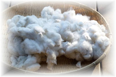 綿の収穫8