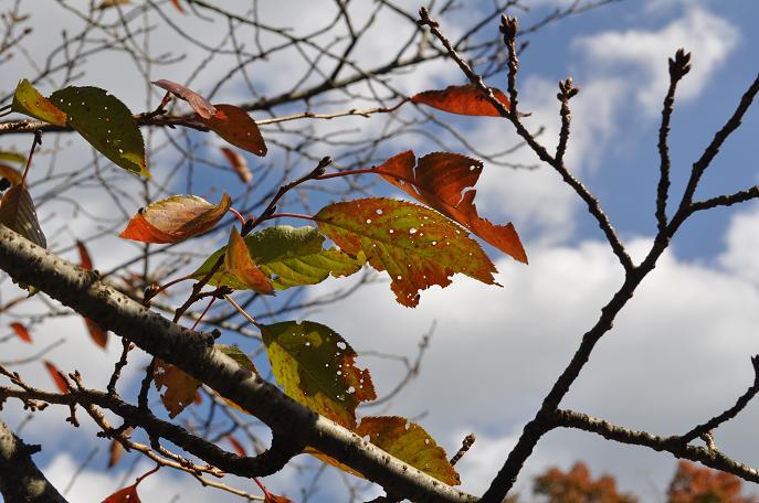 10月の紅葉1