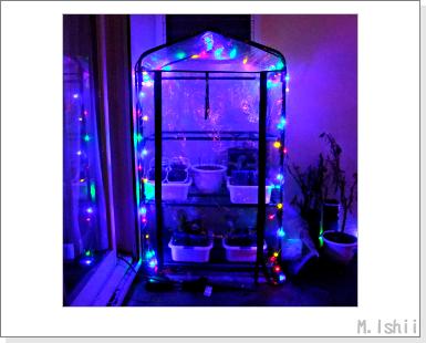 簡易温室のイルミネーション