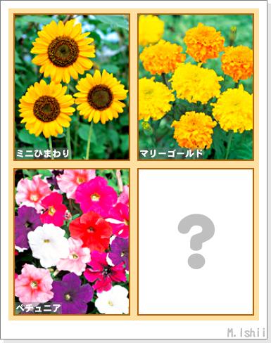 花のペットボトル栽培II-01