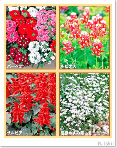 花のペットボトル栽培II-02
