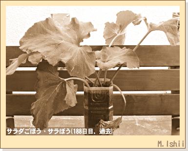 ペット栽培・試験録2012-01