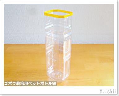 ペット栽培・試験録2012-02