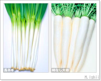 ペット栽培・試験録2012-03