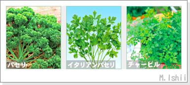 ペット栽培2012秋冬I