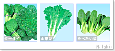 ペット栽培2012秋冬II