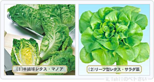 野菜投票2014_03