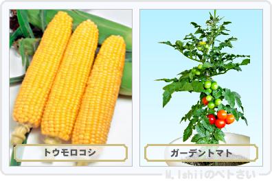 野菜投票2015_01