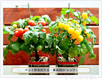 ペット野菜四天王01