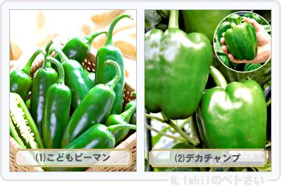 野菜投票2015_02
