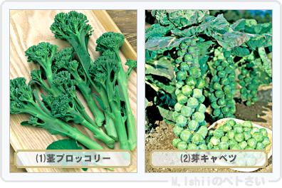 野菜投票2015_03