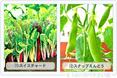 野菜投票2015_04