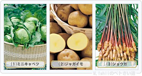 野菜投票2016_01