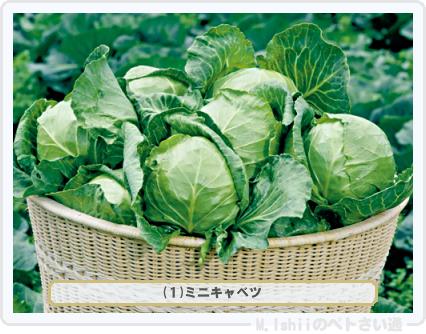 野菜投票2016_01候補01