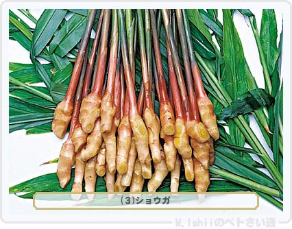 野菜投票2016_01候補03