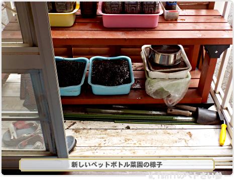 転居後のペットボトル野菜の様子01